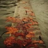 residui d'autunno