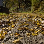 Autunno in Erve